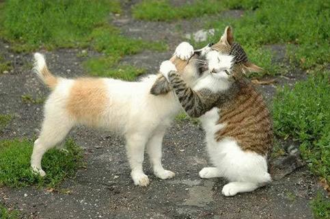 un chat prend le chien dans ses pattes pour un calin