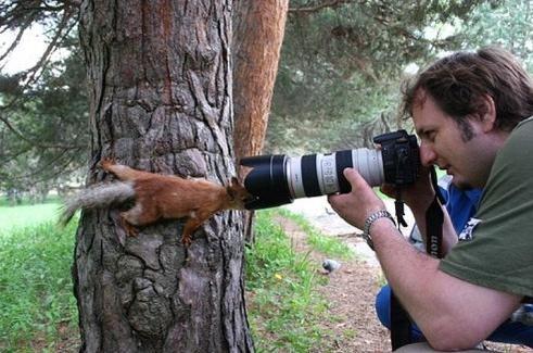 Ecureuil curieux regarde dans l objectif d un appareil photo