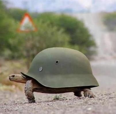 tortue avec un casque de l armee