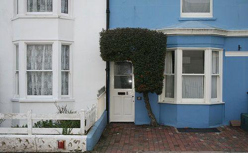 Arbuste et porte