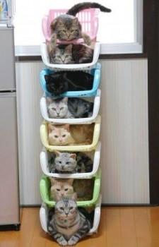 rangement de chats