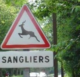 Sangliers ou cerfs, il faut choisir