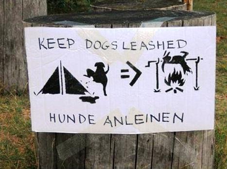 Chiens en camping