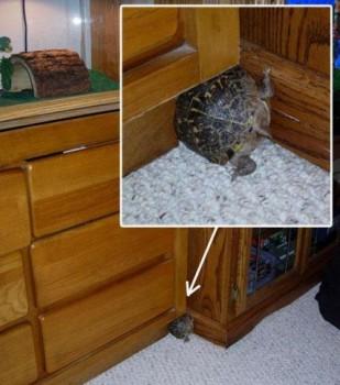 Une tortue dans un trou de souris