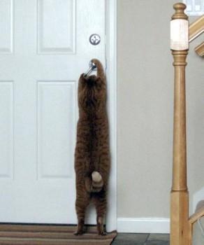 chat qui sait ouvrir une porte