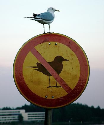 oiseau nargueur