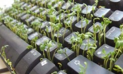 herbe qui pousse sur un clavier