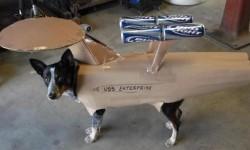 Chien déguisé en USS Enterprise
