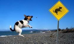 chien qui a de l'humour
