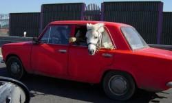 un cheval dans une voiture rouge