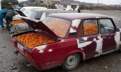 Des voitures d'oranges