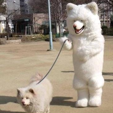 Un chien qui promène un autre chien
