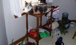 Des gentils chats bien mignons