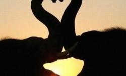 Deux éléphants à la Saint-Valentin