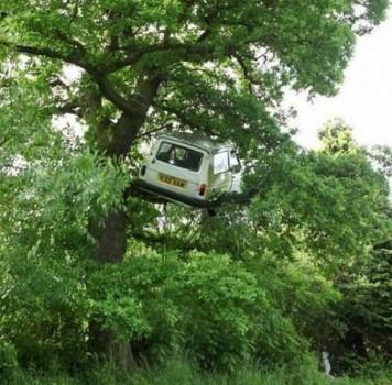 Un remake du film Sur un arbre perché
