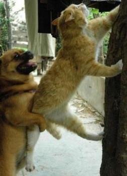 Un chien donne un coup de pouce à un chat