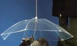 Un parapluie pour chien !