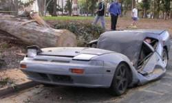 voiture écrasé par un arbre