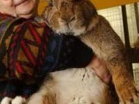 Un lapin géant dans les bras d'un chasseur