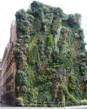 Un mur végétale