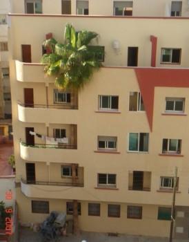 un palmier dans un immeuble