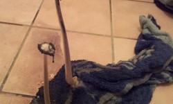 Deux champignons sur une serviette de bain