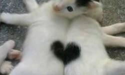 deux chats pour la Saint Valentin
