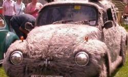 une voiture chat