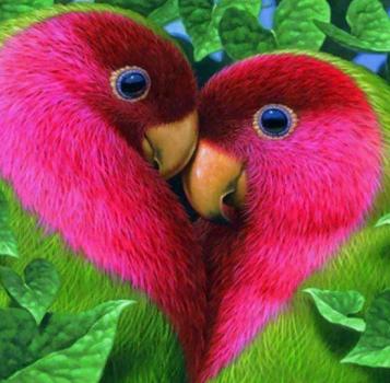 Deux perroquets forment un coeur rose