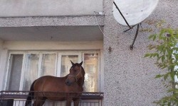 je-me-souviens-plus-ou-j-ai-mis-mon-cheval