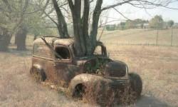 Un arbre à l'intérieure de la voiture