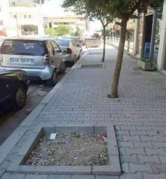 Des arbres mal placés