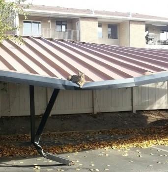 Un chat trop lourd ?