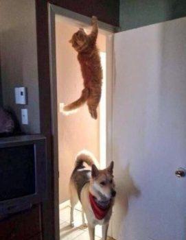 Un chien et et un chat qui jouent à cache-cache