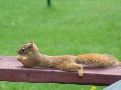 se la couler douce quand on est un écureuil