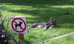 pelouse pour les chats, interdit aux chiens ;)