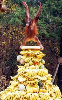 Le-prince-des-bananes